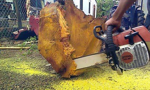 Gỗ Lõi Mít tức là phần gỗ lấy ở đoạn chính giữa thân cây mít