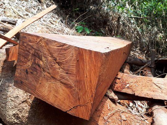 Nhận biết gỗ pơ mu thật giả bằng thành phẩm dựa trên bề mặt gỗ